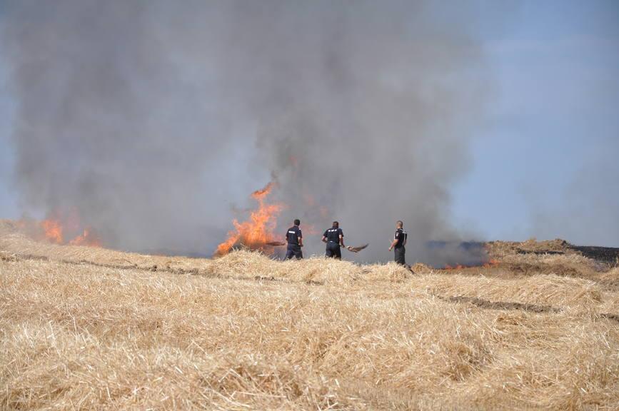 Iadul dezlantuit  30 de hectare de orz si 20 de hectare de miriste cuprinse de flacari | imaginea 4